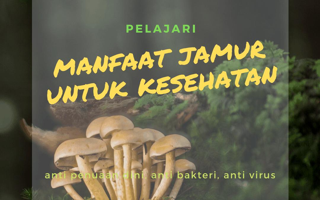 manfaat jamur untuk kesehatan